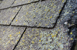 Roof shingles covered in green mold